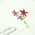 catalogue-085